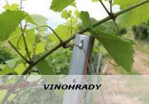 Uvodna foto - Vinohrady